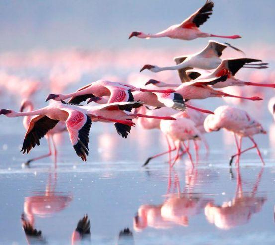 Фотообои Улетающие фламинго 11754