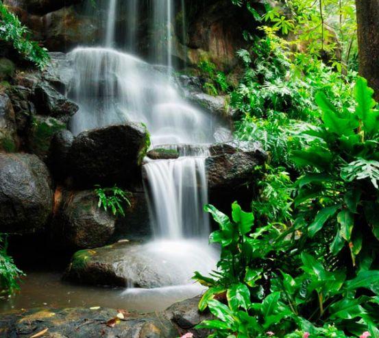 Фотообои Райское место леса 8998