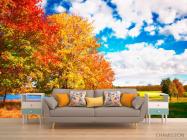 Фотообои Осень, деревья - 1