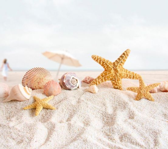 Фотообои Ракушки на песке 0557