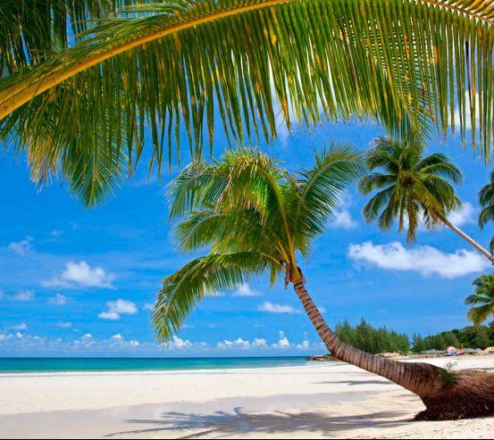 Фотообои Пляж в пальмах 7044