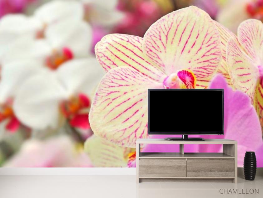 Фотообои Орхидеи в крапинку  - 2