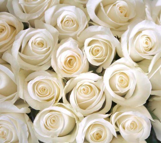 Фотообои Розы белоснежные 5623