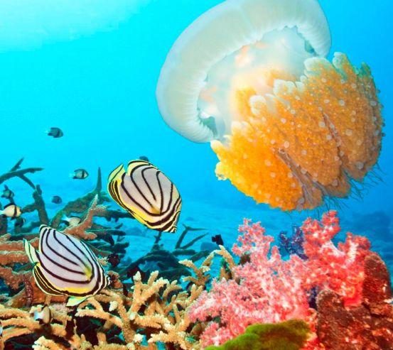 Фотообои Подводный мирок 6968