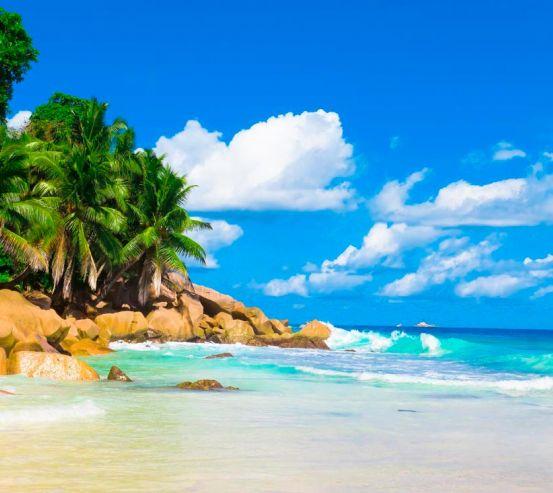Фотообои Пляж, пальмы, солнце 5211
