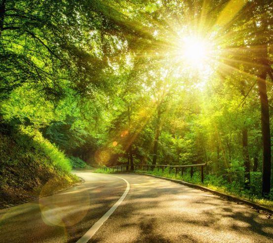 Фотообои Восход в лесу 24446