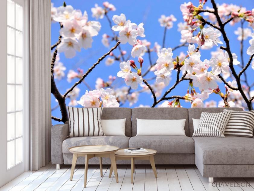 Фотообои Расцвели абрикосы весной - 3