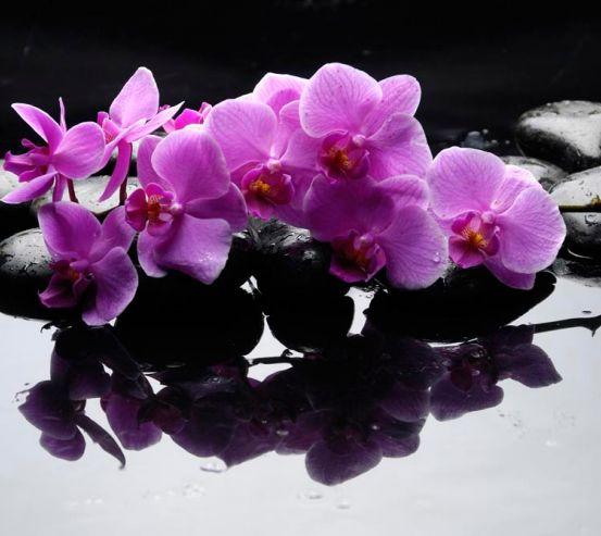 Фотообои Ветка орхидеи на камнях 5984