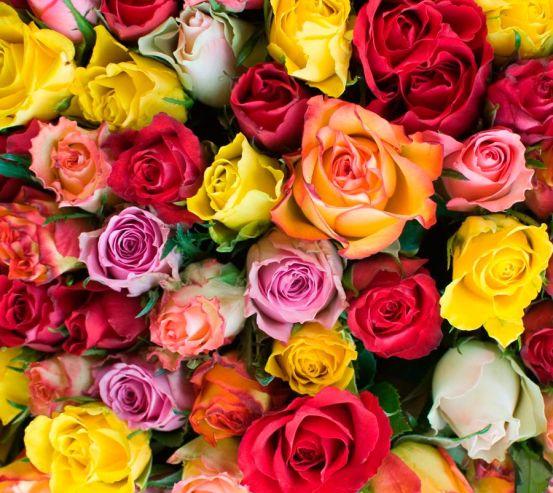 Фотообои Розы разноцветные 5161