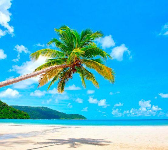 Фотообои Склонившаяся пальма у моря 2244