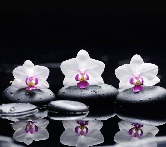 Фотообои Орхидея 18629