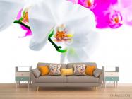 Фотообои Бело-розовые орхидеи - 1