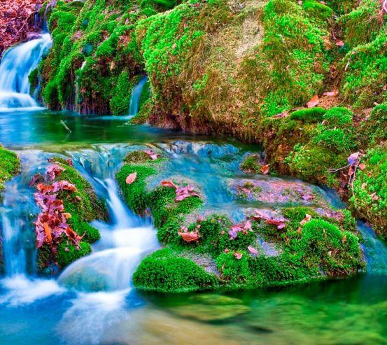 Фотообои Мох, вода 8906