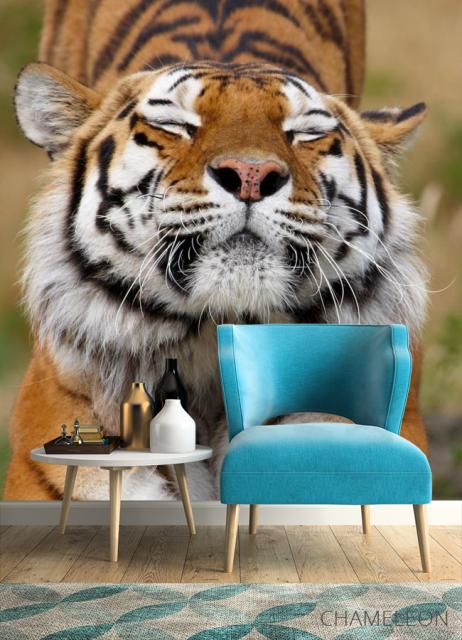 Фотообои тигр потягивается - 4