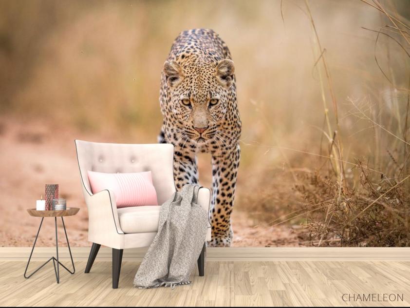 Фотообои гепард - 4