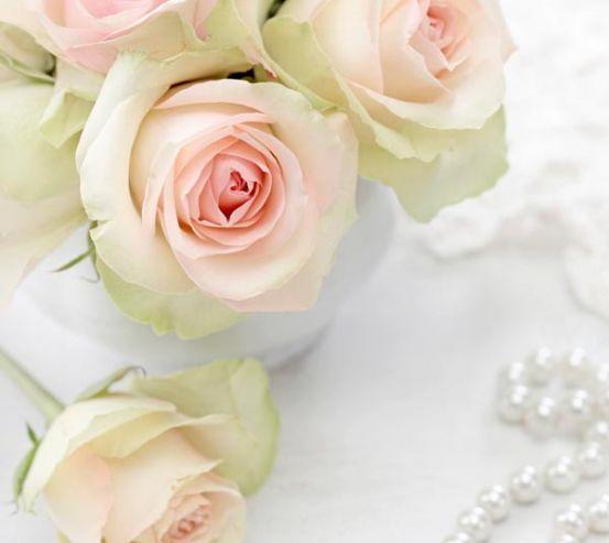 Фотообои Белые розы 4678