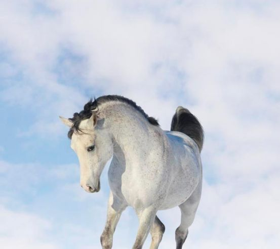Фотообои Белый конь 0462