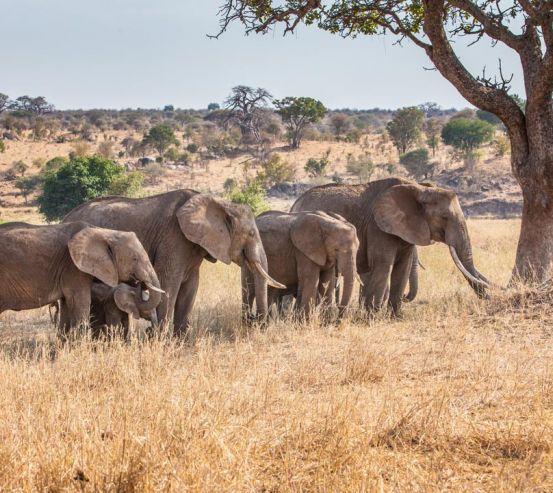 Фотообои слоны и слонята 20601