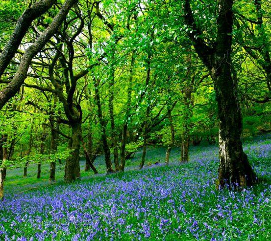 Фотообои Между деревьями цветы 3616