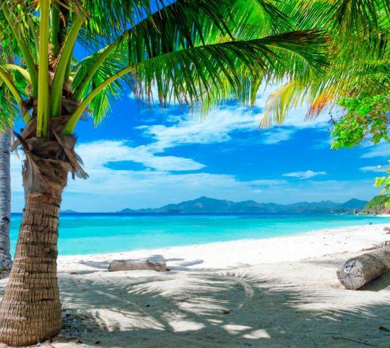 Фотообои Пляж с пальмами 6955