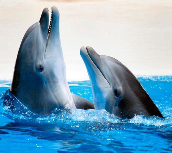Фотообои Общение дельфинов 9936