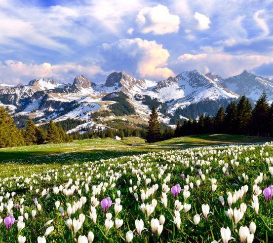 Фотообои Первоцвет весенний 13390