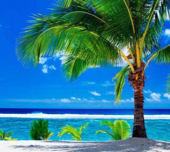 Фотообои Раскидистая пальма 9752