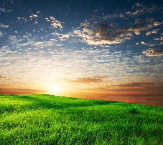 Фотообои Трава, небо 3310