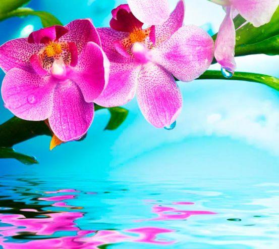 Фотообои Орхидея 12935