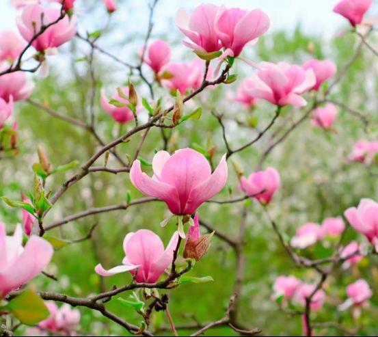 Фотообои Бледно-розовый кипарис 5162