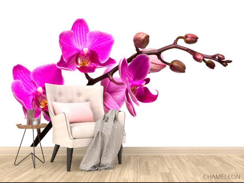 Фотообои Веточка розовой орхидеи - 4
