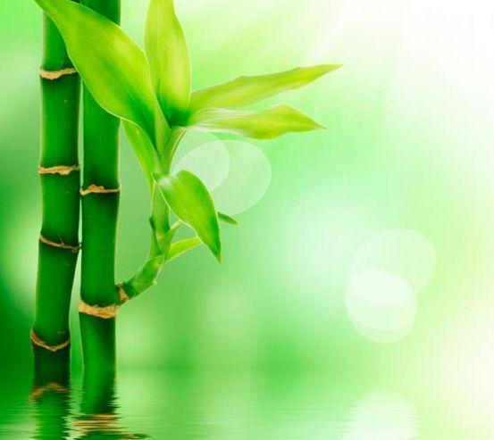 Фотообои Китайский бамбук 1651