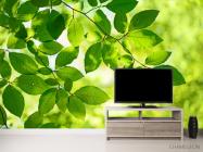Фотообои зеленые листья на дереве - 2