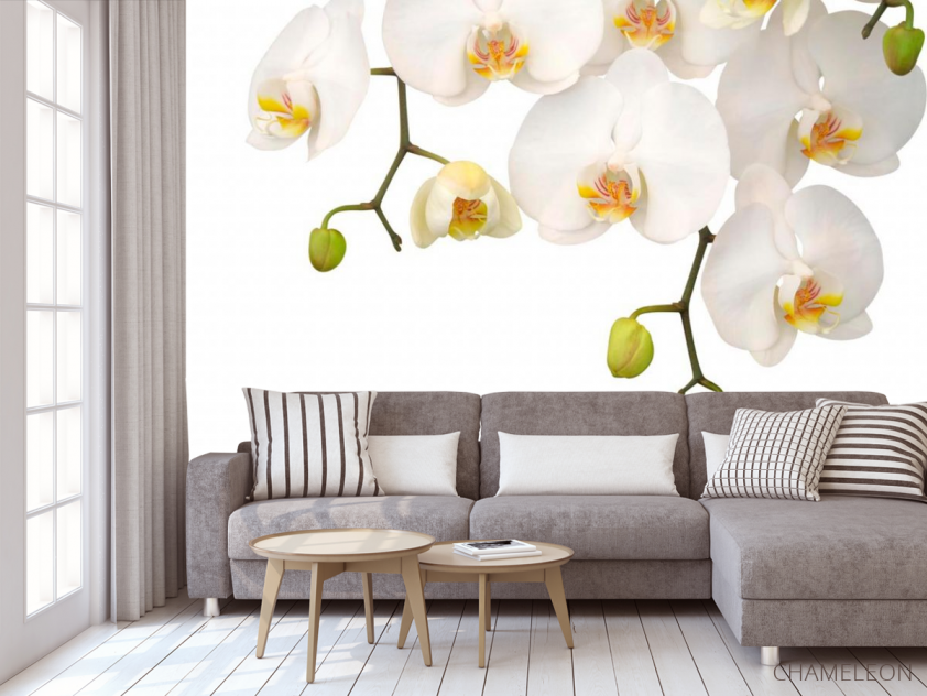 Фотообои Орхидеи белые и бутоны - 3