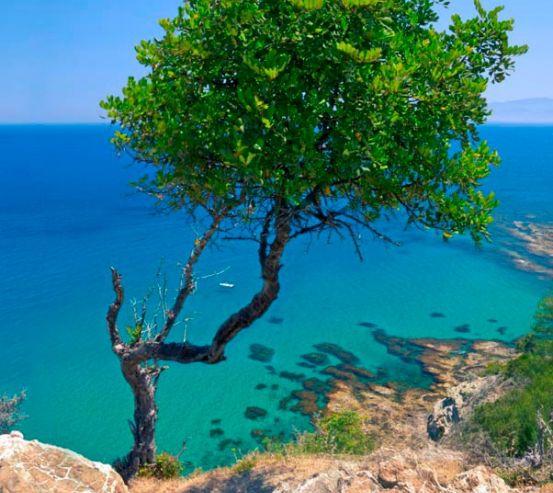 Фотообои Дерево на скале 3406