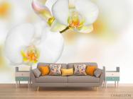 Фотообои Орхидеи белые с желтым - 1