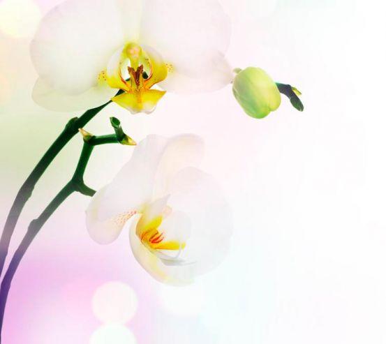Фотообои Цветущий абрикос 1355