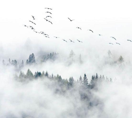 Фотошпалери Туманний ліс з птахами 28952