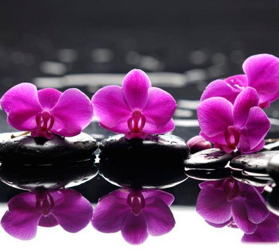 Фотообои Орхидеи малинового цвета 8877