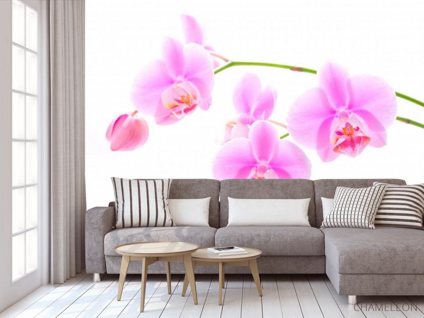 Фотообои Орхидеи распустились - 3