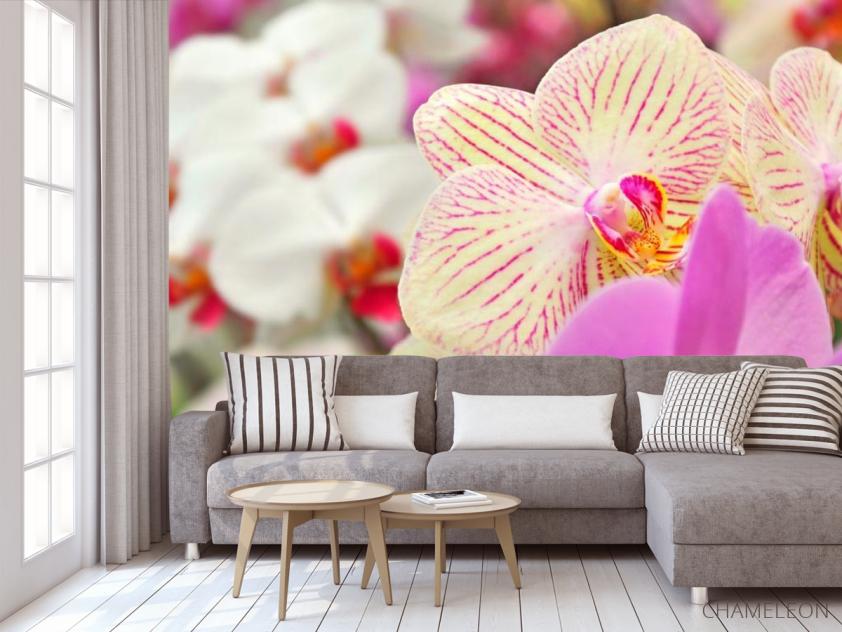 Фотообои Орхидеи в крапинку  - 3