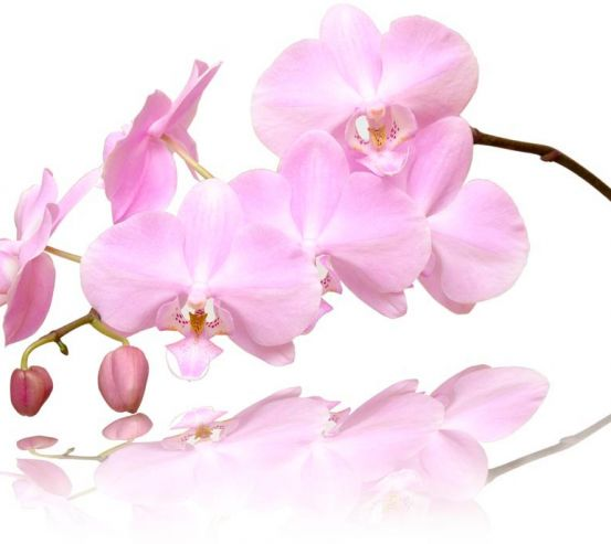 Фотообои Розово-белые орхидеи 8324