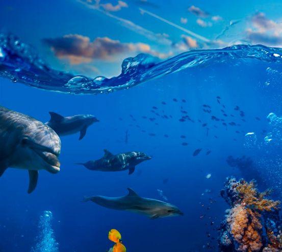 Фотообои Дельфины в море 10308