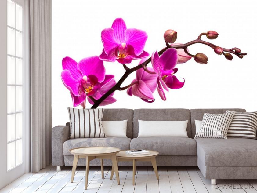 Фотообои Веточка розовой орхидеи - 3