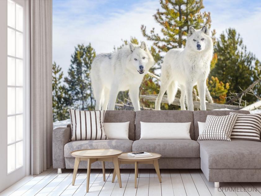 Фотообои два белых волка на снегу - 3