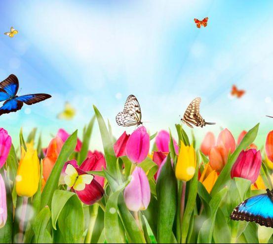 Фотообои Тюльпаны, поле, бабочки 10355