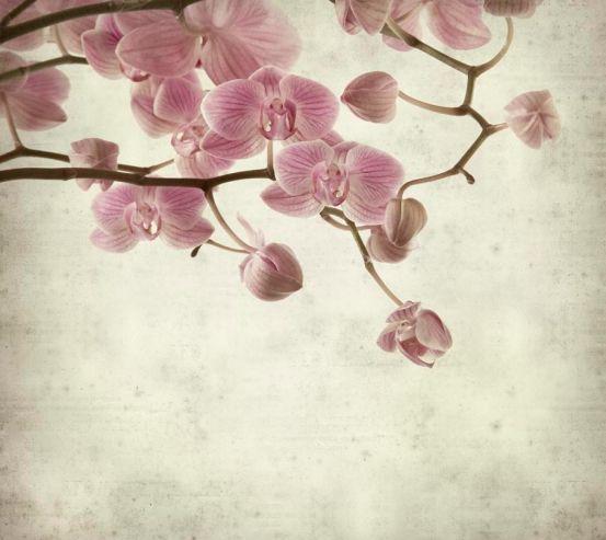 Фотообои Орхидеи кремово-серые 5831