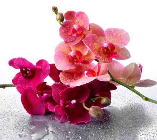 Фотообои Орхидея 13344