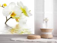 Фотообои Белоснежная орхидея в воде - 2