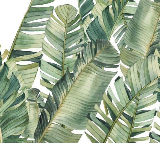 Фотообои Банановые листья 24255